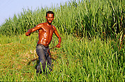 23 JULY 2002 - TRINIDAD, SANCTI SPIRITUS, CUBA: A machetero (literally machete man but colloquially a man who work with machetes) works on the edge of a sugar cane field in the Valle de los Ingenios (Valley of the Sugar Mills) near the colonial city of Trinidad, province of Sancti Spiritus, Cuba, July 23, 2002. Trinidad is one of the oldest cities in Cuba and was founded in 1514. Valle de los Ingenios was the heart of Cuba's early sugar industry and is still a leading producer of sugar, one of Cuba's most important cash crops..PHOTO BY JACK KURTZ