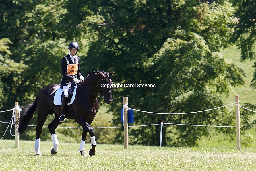 Furst Opera  Stallion Parade  Bramham International Horse Trials 2011