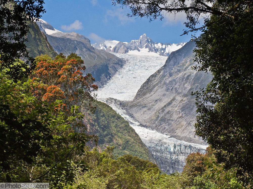 Fox Glacier, South Island, New Zealand. As of 2012, both the Fox and Franz Josef Glaciers are more than 2.5 kilometers (1.6 miles) shorter than a century ago. Fox Glacier retreated throughout most of the last 100 years, advanced from 1985-2009, then began retreating again. In 1990, UNESCO honored Te Wahipounamu - South West New Zealand as a World Heritage Area.