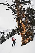 Day's Draw _ Ski Trees
