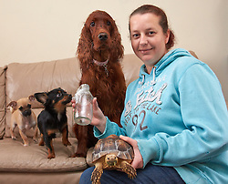 © Licensed to London News Pictures.  06/11/2013. OXFORDSHIRE, UK. <br /> <br /> Vicki White (pictured) holds a milk bottle containing a false widow spider surrounded by some of her pets  her pets including (L to R) Abi, a 4 month old Chug, Albert a 7 month old Chihuahua, Poppy a red setter and an unnamed giant tortoise. <br /> <br /> Nursery manager Vicki White found the spider in the bathroom of her Chalgrove home after returning from holiday. After safely trapping it in a milk bottle she has added it to the family's large collection of animals. Vicki and her children own three dogs, four cats, two micro pigs, two giant tortoises, four turtles, two rats and one spider.   <br /> <br /> Photo credit: Cliff Hide/LNP