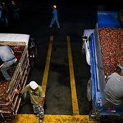 Coffee is processed in the Terrazu region of Costa Rica. (Joshua Trujillo, Starbucks)