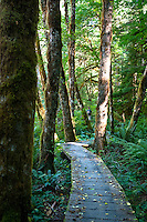 A boardwalk covered in leaves winds through the forest trail along the Cowichan River, on Vancouver Island, BC