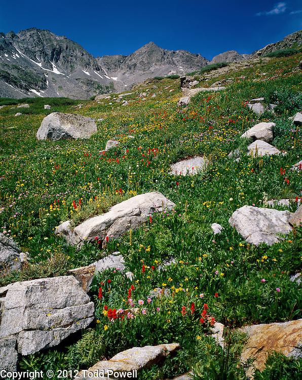 Wildflowers, Monte Cristo Gulch, July