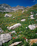 Wildflowers, Monte Cristo Gulch, July