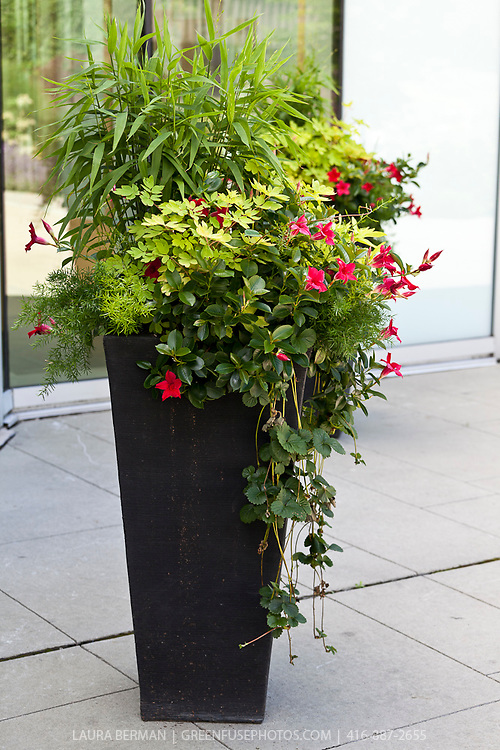 Decorative planting in tall, black pots.