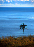 Lone palm tree on the coast of Gizo, Solomon Islands