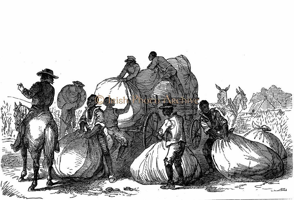 Negro labour loading sacks of cotton on cart to be taken for dressing and ginning. Southern states of USA. Wood engraving, London, 1860.