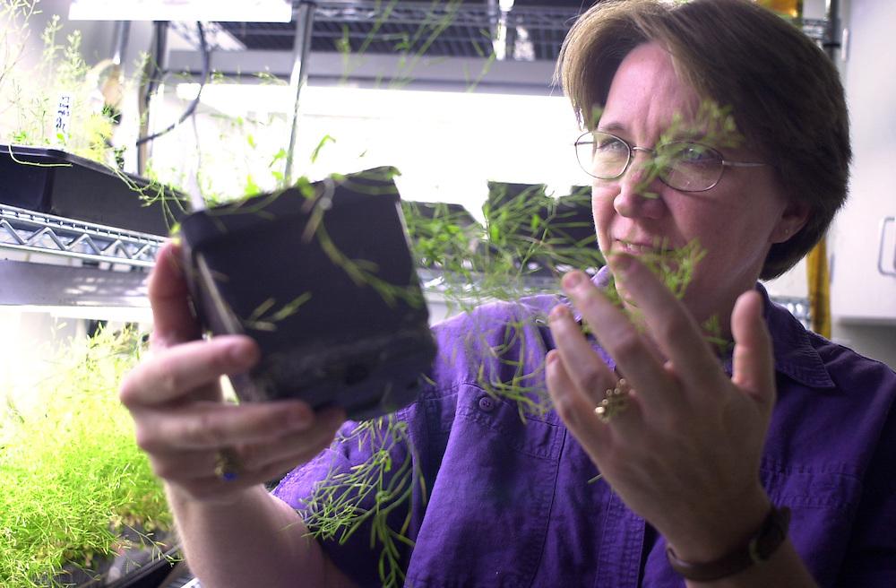 Sarah Wyatts in Plant Lab