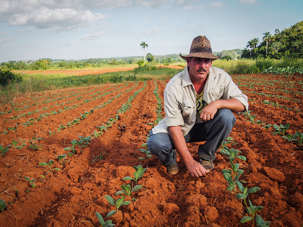 Tobacco farmer in Vinales, Cuba. At this farm tobacco is grown then dried and cured to create the famous Cuban Cigars. Travel images from Havana Cuba. Pictures by Chris Pavlich Photography.