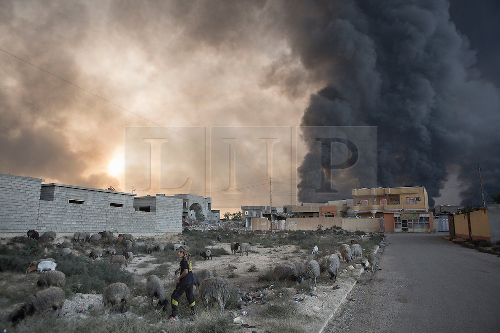 Licensed to London News Pictures. 20/10/2016. A young shepherd tends to his herd beneath a cloud of smoke rising from burning oil wells. The wells were set alight in July by retreating Islamic State militants as part of a scorched earth policy.<br /> <br /> Since being retaken from the Islamic State the town of Qayyarah has become an important staging post for the Iraqi Army, and some US support elements, in the buildup to the Mosul offensive. Photo credit: Matt Cetti-Roberts/LNP