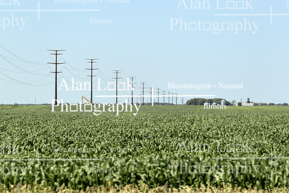 A row of high power lines and towers dot the edge of a corn field.