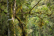 Mosses, Lichens and epiphytes growing on the trees.