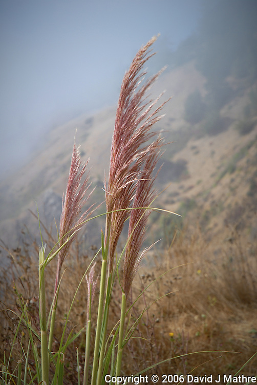 Sea Grass Blowing in the Wind Along a Misty Northern California Coast. Image taken with a Nikon D200 and 18-70 mm kit lens (ISO 100, 62 mm, f/8, 1/250 sec).