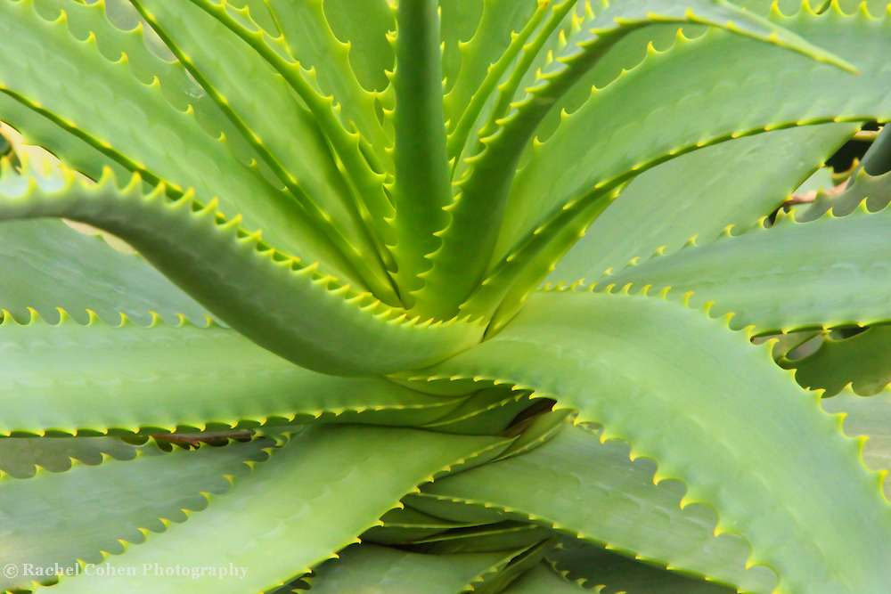 &quot;Aloe Vera Defined&quot;<br />