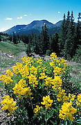 Rocky Mountain National Park, wildflowers, Colorado