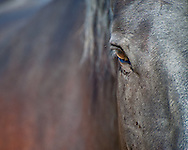 Look this horse in the eye.