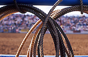 24 FEBRUARY 2002, TUCSON, ARIZONA, USA: Ropes hang on a fence near the bucking chutes at the Fiesta de los Vaqueros Rodeo in Tucson, Az, Sunday, Feb. 24, 2002. The Fiesta de los Vaqueros Rodeo has been held for 77 years and is one of the largest professional rodeos in the US..PHOTO BY JACK KURTZ