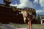 Mongolia. Ulaanbaatar. Young contorsionist  woman of The  - Mongol Nomadic Circus -  in Choijin lamyn museum, UlanBaatar.  /  jeune fille contorsioniste du  Mongol nomadic circus a  Oulan Bator  Mongolie