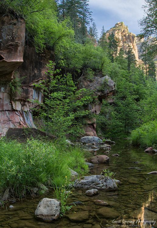Morning light strikes sandstone cliffs on a warm June morning in West Fork, Oak Creek Canyon.