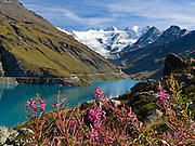 "Dent Blanche (upper right 4356 meters or 14,291 feet, ""White Tooth"") rises above Lake Moiry and fireweed (Epilobium angustifolium) in Val de Moiry, Valais (Wallis) canton, Switzerland, Pennine Alps, on the High Route (Chamonix-Zermatt Haute Route), Europe. Published in Ryder-Walker Alpine Adventures ""Inn to Inn Alpine Hiking Adventures"" Catalog 2006 (cover image), 2008, 2011."