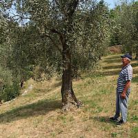 Malcesine terra di ulivi