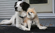 APOLLO & LYLA