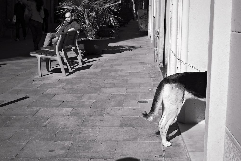 Dog looking into shop entrance, Gracia district, Barcelona