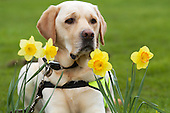 Easter | Dogs for the Disabled