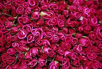 1998, Amsterdam, Netherlands --- pink roses in a market --- Image by © Owen Franken