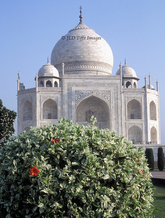 Taj Mahal: domes with hibiscus shrub in foreground, its red blooms and round shape echoing and contrasting with the white marble and round dome of the Taj.