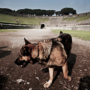 A dog strolls inside Pompeii's Amphitheater.Nearly 4 month after the collapse of the House of the Gladiators and then of a wall at the House of the Moralist, Pompeii still faces neglet and mismanagement.Now the Italian government has begun to investigate the matter. Nine people are to be questioned, although Marcello Fiori, the emergency commissioner who was appointed to save the site in 2008, is conspicuously absent from the group.Those who will be grilled by the public prosecutor include the former superintendent of Naples and Pompeii, the site director who oversaw the waterproofing of the House of the Gladiators, the head of technical services at Pompeii, and an architect. The investigation will also examine Fiori's administration, which ended in July, including its use of government funds, which many critics have seen as wasteful and ineffective.