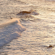 Lone surfer enjoying afternoon waves. Cabo San Lucas, BCS.
