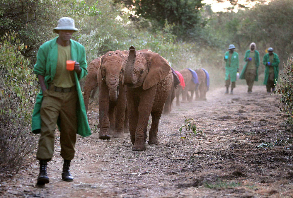 13 orphaned elephants currently live at the sanctuary. The elephants get up at 6am and hang around the house for a bit before heading off into the bush.