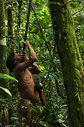Huaorani Indian Oña Yate hunting with his blowgun. Gabaro Community. Yasuni National Park.<br /> Amazon rainforest, ECUADOR.  South America<br /> This Indian tribe were basically uncontacted until 1956 when missionaries from the Summer Institute of Linguistics made contact with them. However there are still some groups from the tribe that remain uncontacted.  They are known as the Tagaeri & Taromenani. Traditionally these Indians were very hostile and killed many people who tried to enter into their territory. Their territory is in the Yasuni National Park which is now also being exploited for oil.