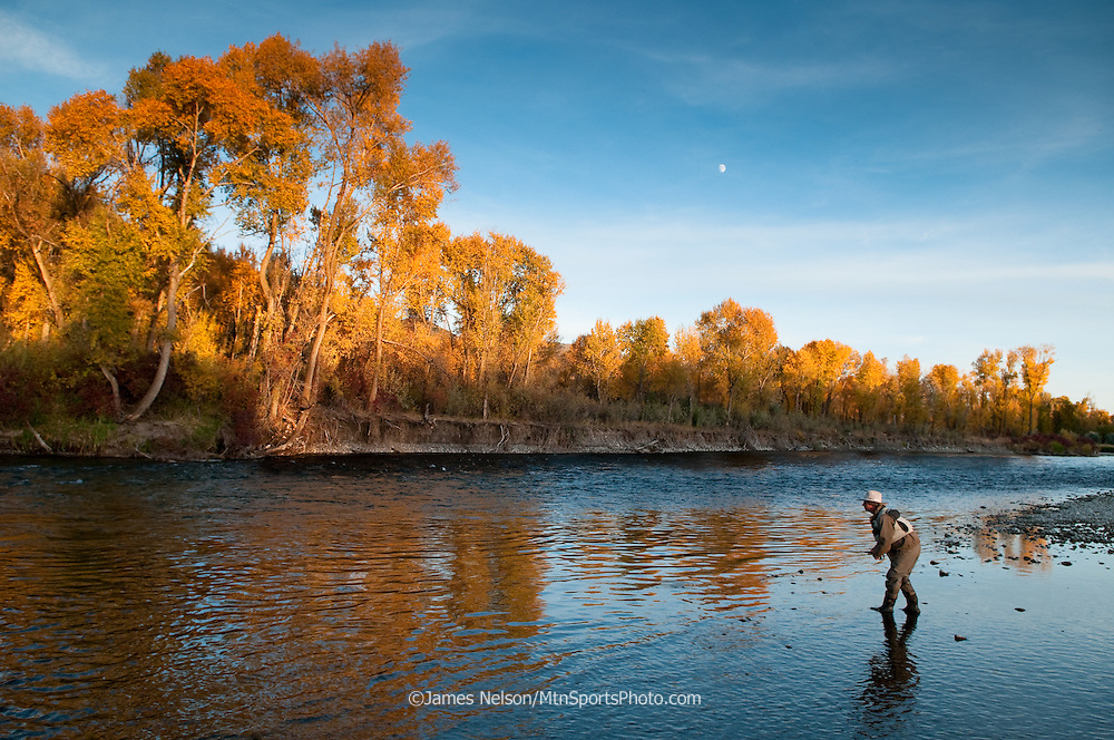 An angler casts a fly for trout as the sun goes down and moon rises on a fall day; South Fork of the Snake River, Idaho.