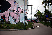 """Little dog in front of the """"Meetfactory"""" building which is a International Center of Contemporary Art in Prague."""