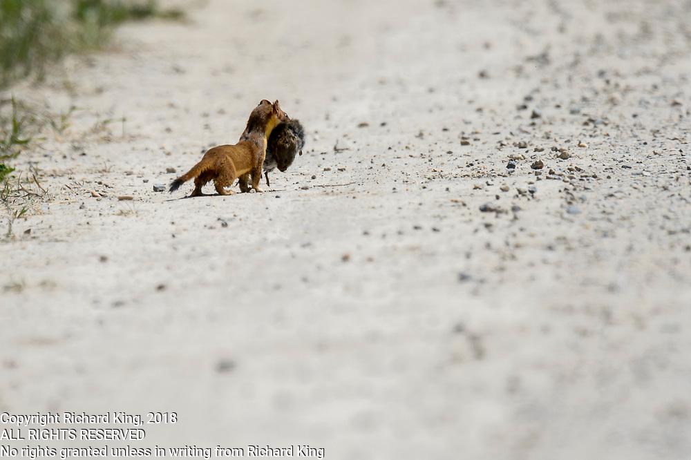 Birding photography from Farmington Bay Waterfowl Management Area, The Great Salt Lake, UT, USA