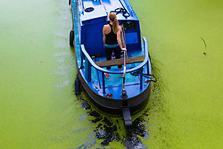 According to the Met Office, August 31st marks the last day of summer and there certainly is a bit of a nip in the air around Little Venice in London as a woman steers her narrowboat through the duckweed infesting the Regents and Grand Union canals. London, August 31 2018.