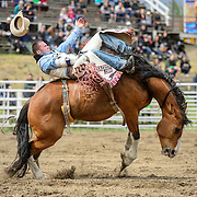 The Falkland Stampede-Saddle bronc riding.