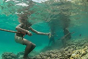 Image photographed at Kimbe Bay, Papua New Guinea, Pacific Ocean.