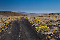 CAMINO ENTRE LA ESTEPA FLORECIDA, CONOS VOLCANICOS AL FONDO, RESERVA PROVINCIAL LA PAYUNIA (PAYUN, PAYEN), MALARGUE, PROVINCIA DE MENDOZA, ARGENTINA (PHOTO © MARCO GUOLI - ALL RIGHTS RESERVED)
