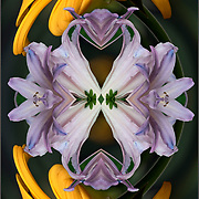 Computer abstract of altered and enhancement of Flower Petals as digital computer art.<br /> <br /> Two or more layers were used to enhance, alter, manipulate the image, creating an abstract surrealistic mirrored symmetry.