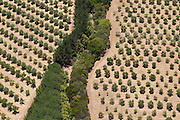 Olive Grove - @Martine Perret - Margaret River aerial shot. 13 December 2013
