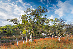 Hill Country Landscapes