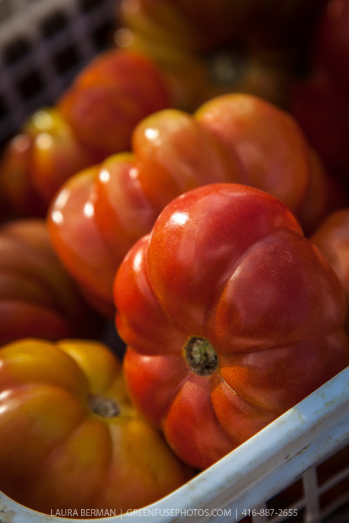 Red, ruffled, heirloom tomatoes at a farmers market.