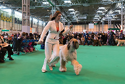 © Licensed to London News Pictures. 09/03/2017. Dog owners with their Afghan Hound dogs in competition on the first day of Crufts, the world's largest dog show. The annual event is organised and hosted by the Kennel Club and has been running since 1891.. Birmingham, UK. Photo credit: Ray Tang/LNP