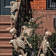 Four Halloween skeletons decoration on side of brownstone in Greenwich Village, NYC.
