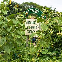 The Dowling Community Garden in St. Paul; Minnesota