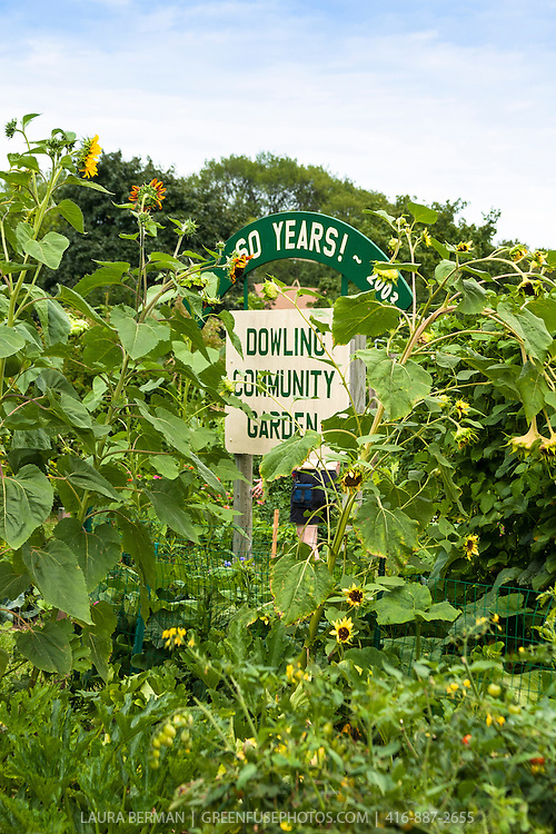 The Dowling Community Garden in St. Paul; Minnesota